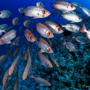 3_100 RED SEA. i LOVE THE SEA Co