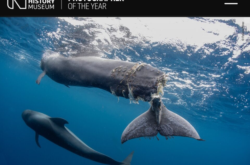 56th WILDLIFE PHOTOGRAPHER OF THE YEAR