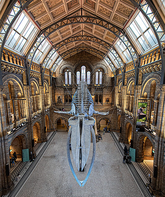 WILDLIFE PHOTOGRAPHER OF THE YEAR. NHM. LONDON